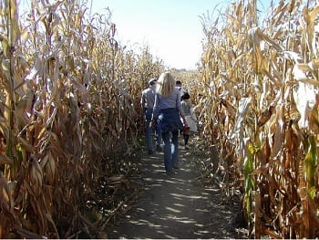15 Fabulous Fall Date Ideas - Corn Maze Date